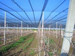 monofilament shade nets